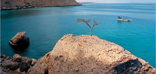 معلومات عن جزيرة سقطرى