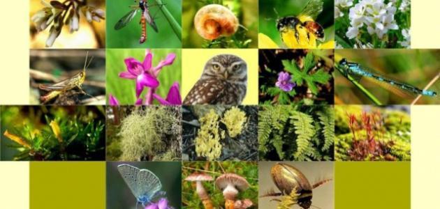 مقالة عن تنوع الأحياء