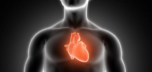 فوائد القلب للجسم