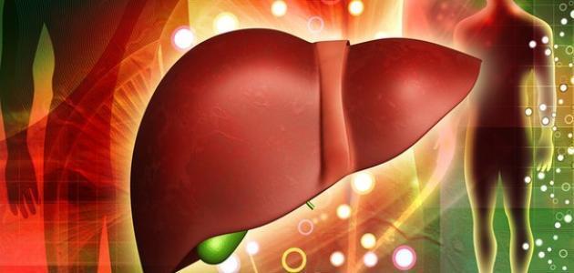 وظيفة الكبد في الجسم