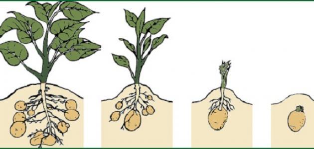 مراحل النمو عند النبات موضوع