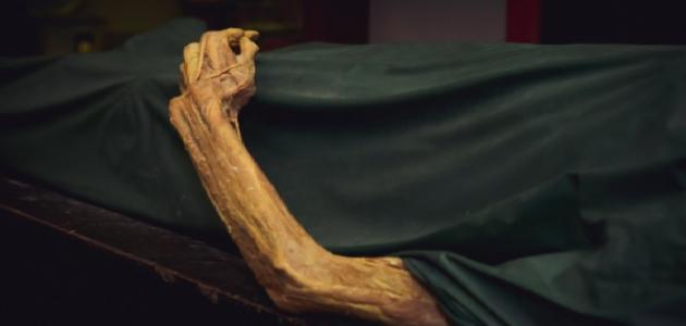 مراحل تحلل جسم الإنسان