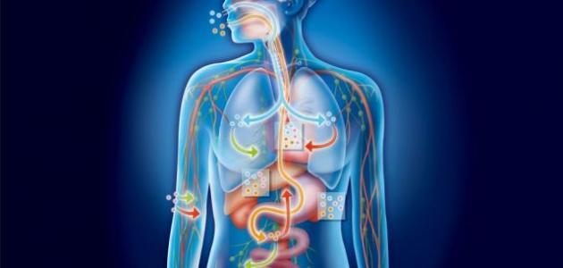 معلومات طبية عامة عن جسم الإنسان