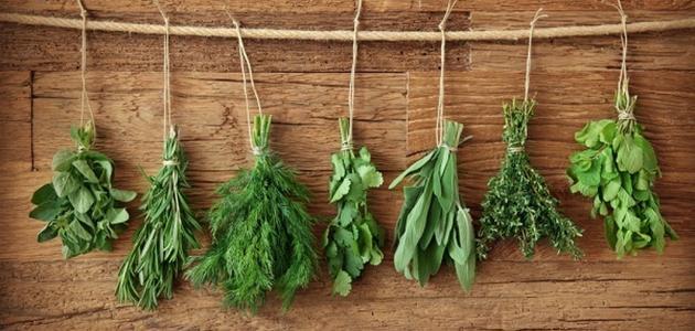 فوائد بعض الأعشاب الطبية