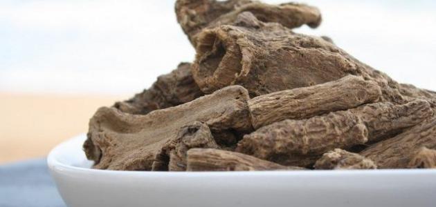 فوائد عشبة القسط البحري