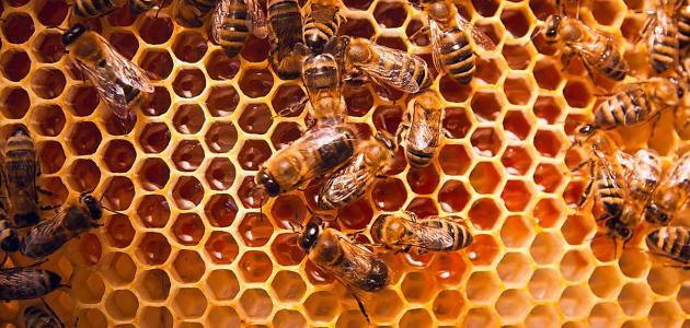 فوائد عسل الغذاء الملكي