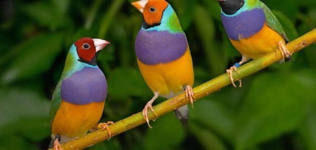 فوائد تربية الطيور