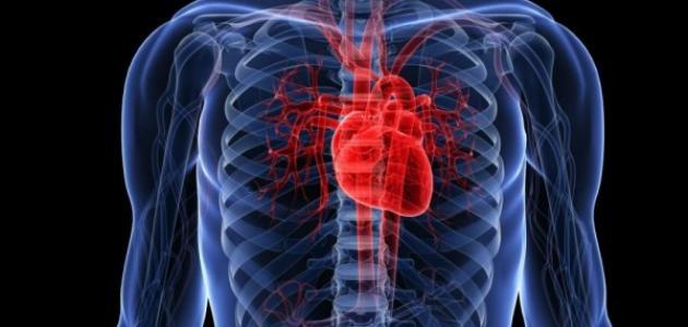 وظائف القلب