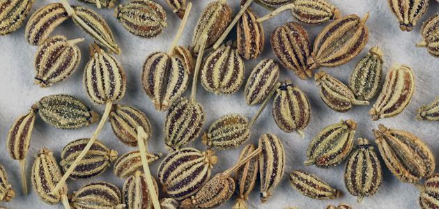 فوائد عشبة النانخة