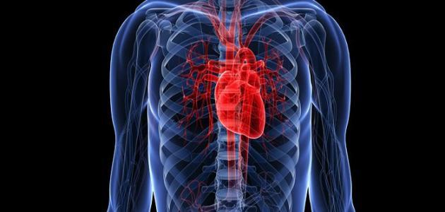 وظائف قلب الإنسان