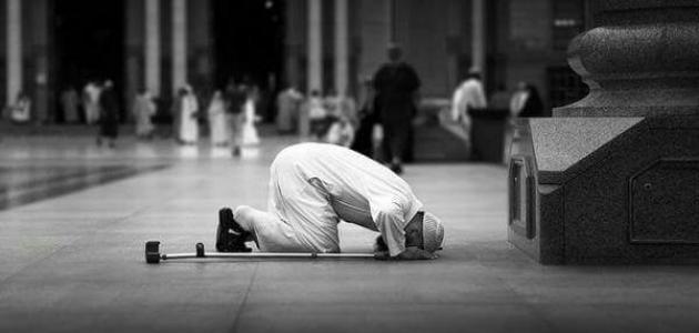 كم سجدة في القرآن