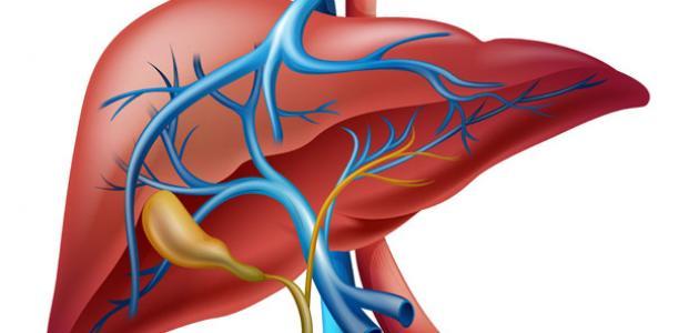 ما هي أعراض تضخم الكبد