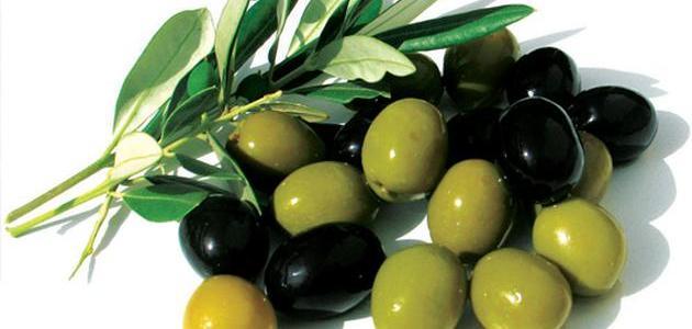 فوائد ثمرة الزيتون