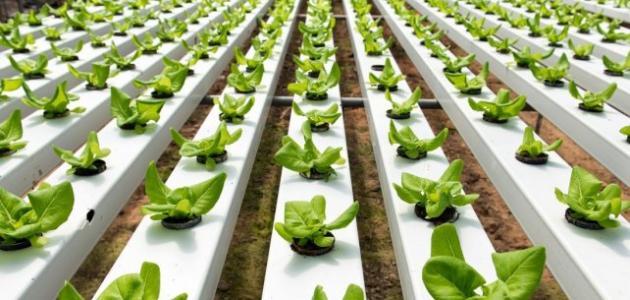 عيوب الزراعة المائية