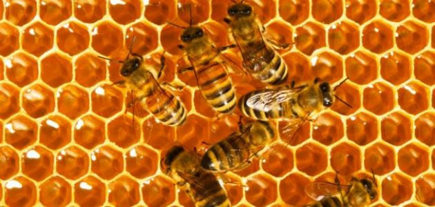 فوائد عسل النحل للعيون
