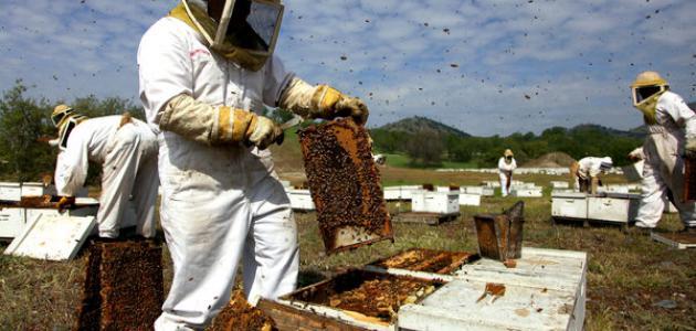 طريقة جني العسل