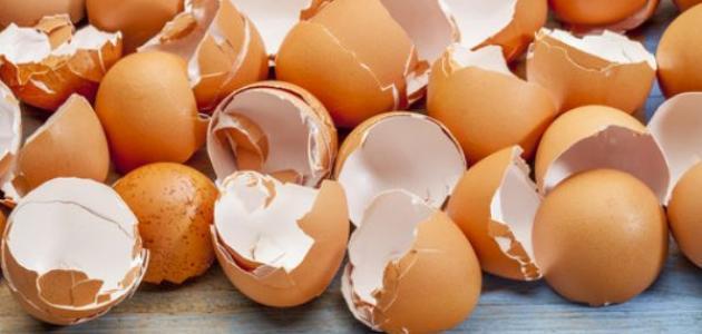 فوائد قشر بيض النعام