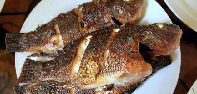 """نتيجة بحث الصور عن سمك بلطي مشوي"""""""