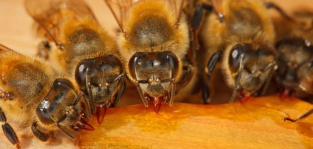 فوائد قرص النحل لمرضى السكر