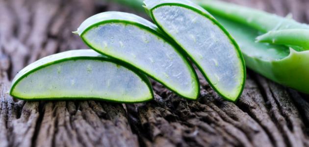 ما فوائد نبات الصبار