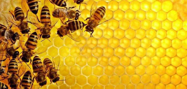 ما فوائد عسل البرسيم