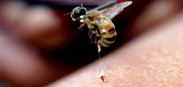 فوائد سم النحل للبشرة