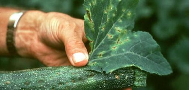الفطريات الممرضة للنبات