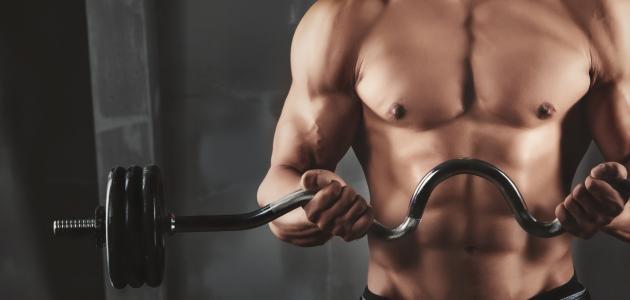 ما هي العضلات