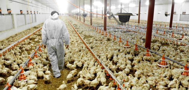 عالية الجودة منزل منزل تصاميم poultrys تربية الدجاج الدجاج