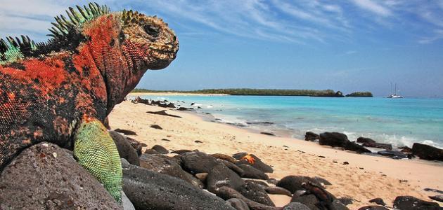 معلومات عن جزر غالاباغوس