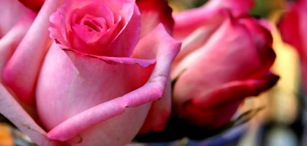 معلومات عن أنواع الزهور