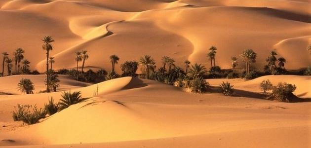 معلومات حول مقاومة النخيل لزحف الصحراء
