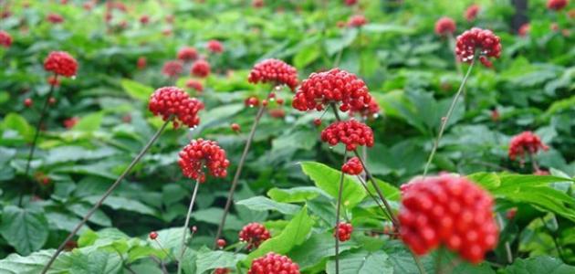 معلومات عن مظاهر قدرة الله في النبات