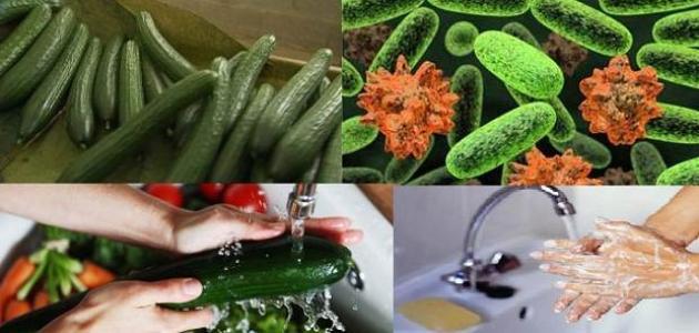 ما هي بكتيريا إي كولاي