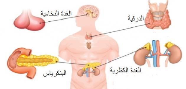 ما هي الغدد الصماء