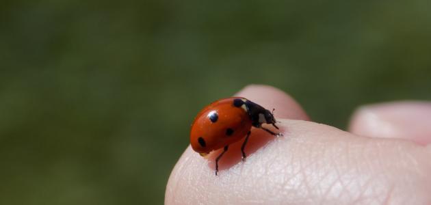 ما هي الحشرات المسالمة