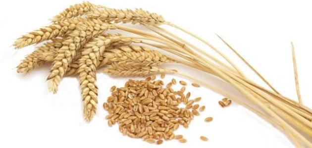 استخدامات القمح في غير الغذاء