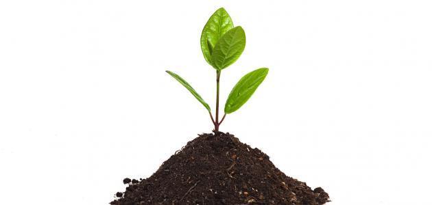 مراحل النمو عند النبتة
