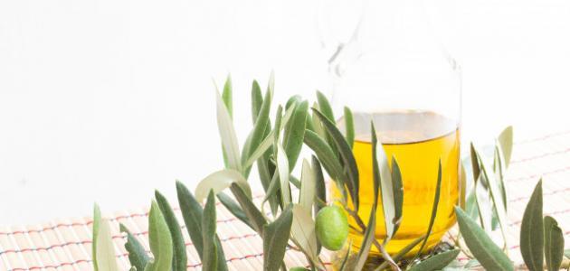 فوائد ورق الزيتون المجفف