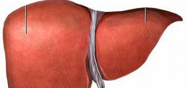 ما هو احتقان الكبد