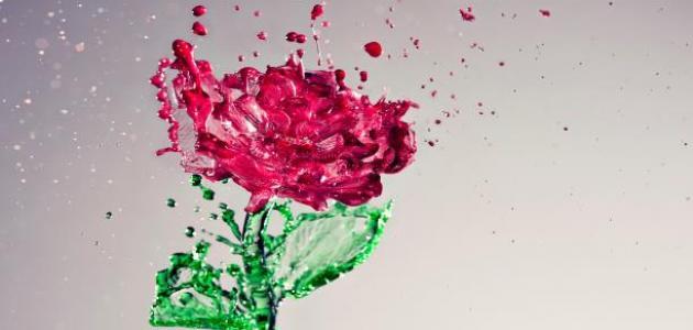 فوائد ماء الورد مع المرة