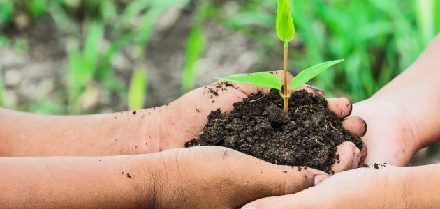ما أهمية المحللات للبيئة