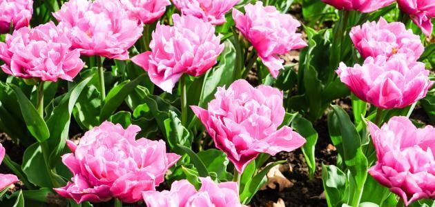 مظاهر تنوع النباتات الزهرية