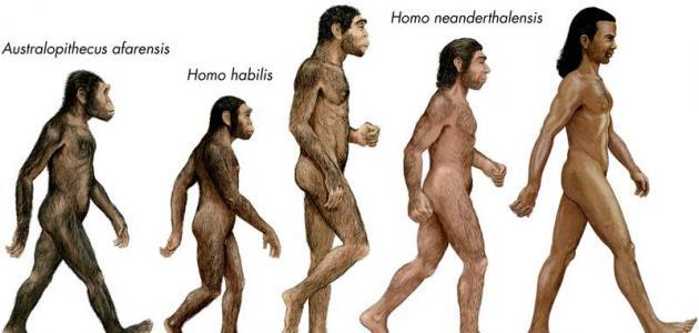 ما هي نظرية داروين ظ…ط§_ظ‡ظٹ_ظ†ط¸ط±ظٹط©_ط¯ط§ط±ظˆظٹظ†.jpg