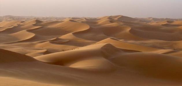 طرق تثبيت الكثبان الرملية