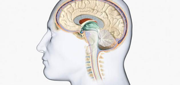أعراض الورم السحائي الدماغي الحميد - فيديو