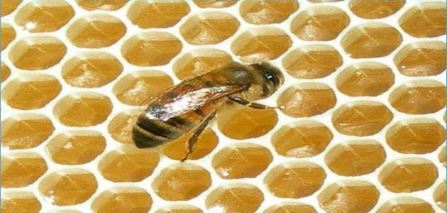 طريقة التخلص من خلية النحل