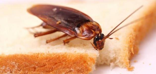 طرق التخلص من صراصير المطبخ