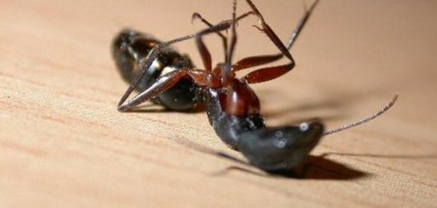 عجائب وغرائب النمل