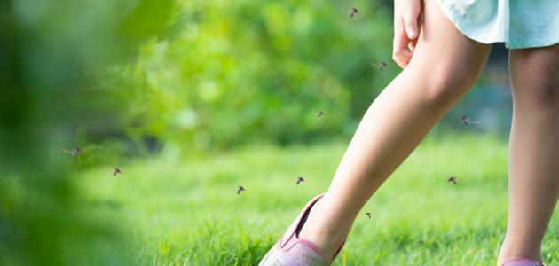 طرق الوقاية من انتشار البعوض والدبور في فصل الصيف